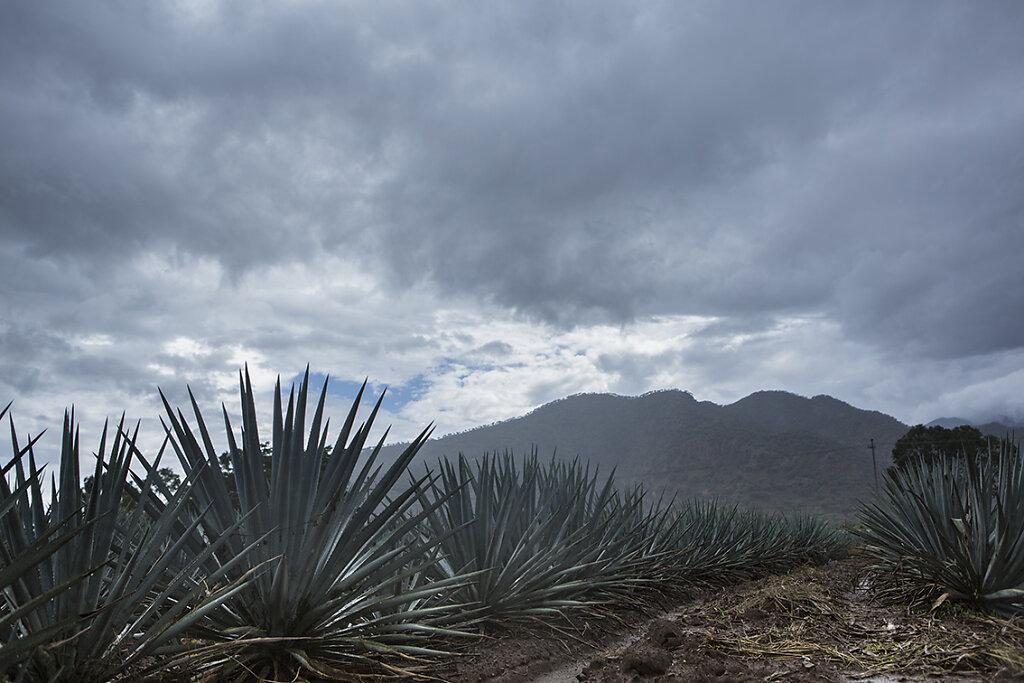 mexico-8.jpg